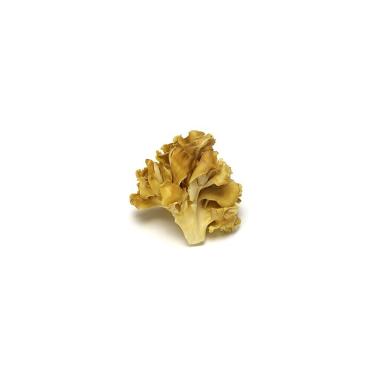 maitake-mushroom-powder-organic